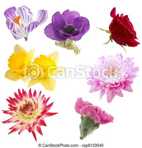 Selección de flores aisladas - csp9133540