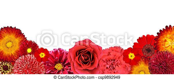 selectie, bodem, vrijstaand, bloemen, rood, roeien - csp9892949