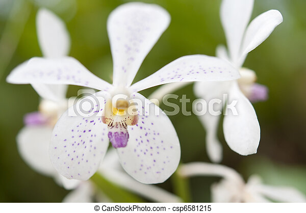 Selection beautiful orchid - csp6581215