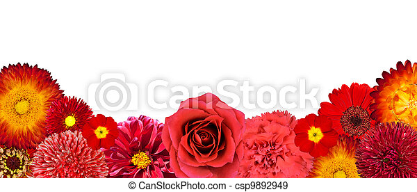 Selection of Red Flowers at Bottom row Isolated - csp9892949