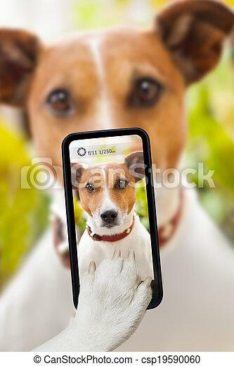 selfie, chien - csp19590060
