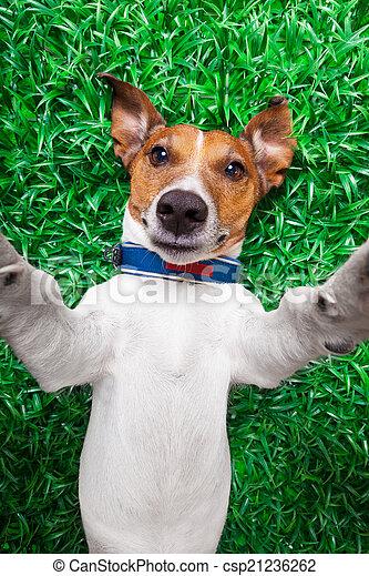 selfie, chien - csp21236262