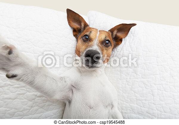 selfie, chien - csp19545488