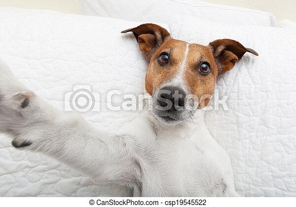 selfie, chien - csp19545522