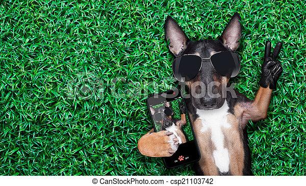 selfie, chien - csp21103742