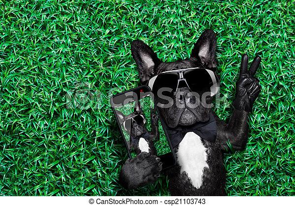 selfie, chien - csp21103743