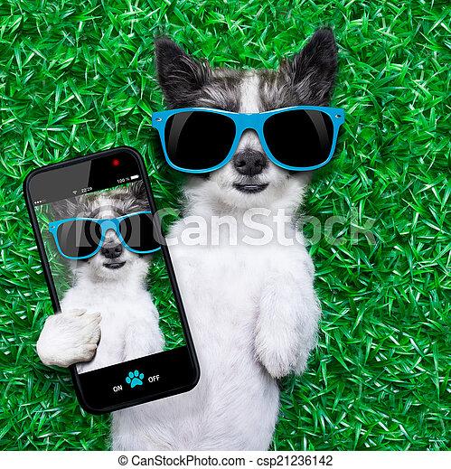selfie, chien - csp21236142