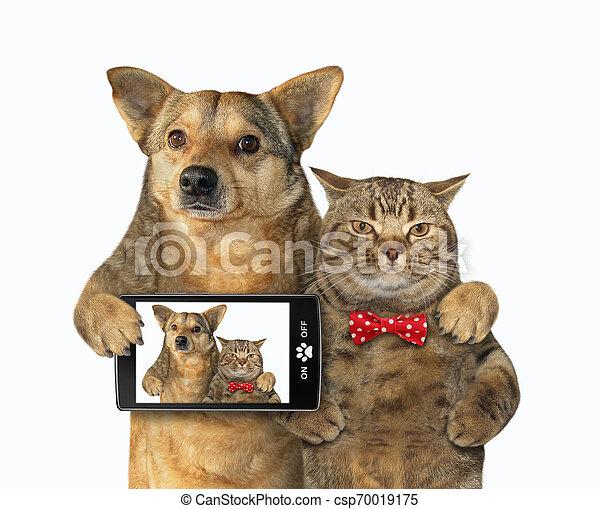 selfie, fait, chien, chat - csp70019175