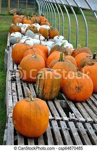Selling Pumpkins - csp64870485