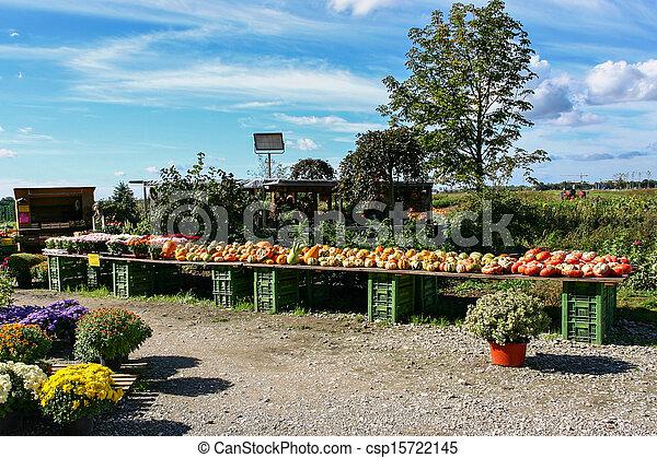 Selling Pumpkins - csp15722145