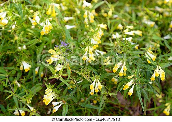 Fiori Selvatici Gialli.Selvatico Flowers Giallo Essere Usato Esso Fiori Gialli