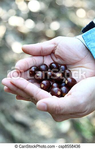 sementes, mãos humanas - csp8558436