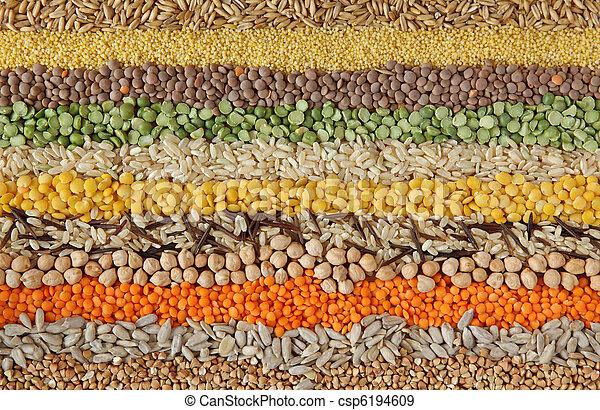 sementes, vário, grãos - csp6194609