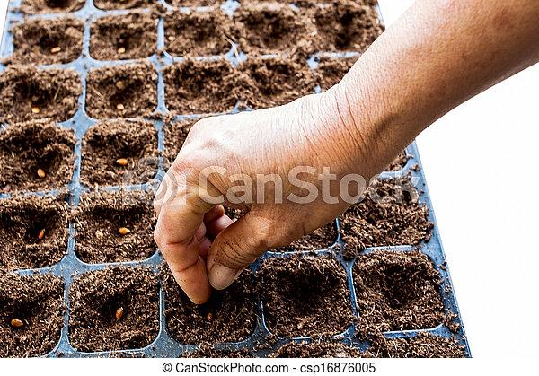 Una mano plantando semillas de sandía - csp16876005
