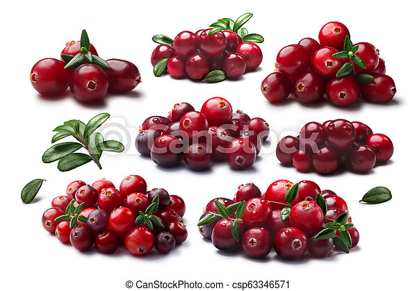 Arándanos y lingonberrys, caminos - csp63346571
