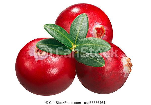 Cranberries contra oxycoccus, caminos - csp63356464