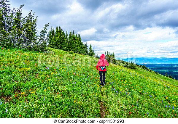 Senior Woman hiking through the Alpine Meadows - csp41501293