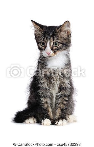 Retrato de un gatito sentado aislado en el fondo blanco mirando a un lado - csp45730393