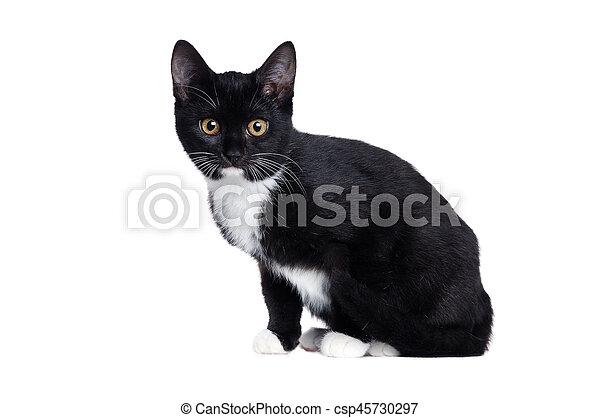 Vista lateral de un gatito negro sentado aislado en blanco - csp45730297