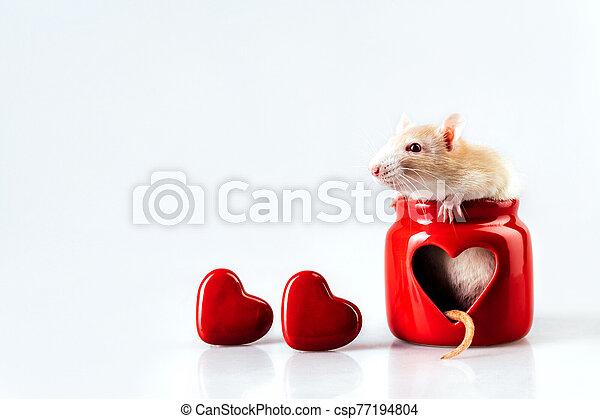 sentado, luz, ventana, candelero, rata, beige, rojo, en forma de corazón - csp77194804