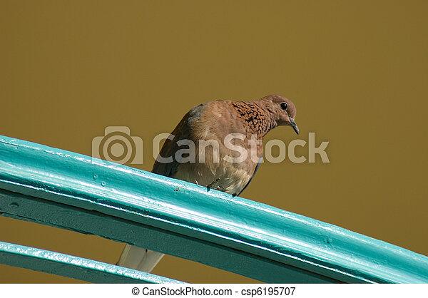 Pigeon sentado en un balcón - csp6195707