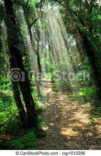 sentier, forêt, ensoleillé - csp1010296