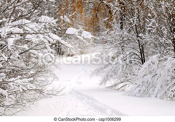 sentier, forêt, hiver - csp1006299