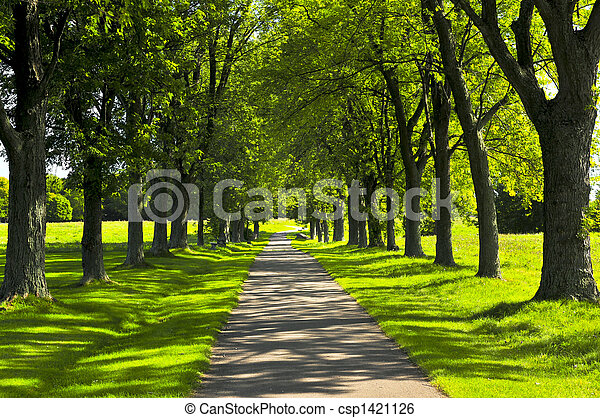 sentier, parc, vert - csp1421126