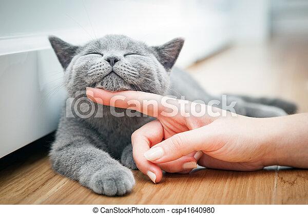 A un gatito feliz le gusta ser acariciado por la mano de una mujer. - csp41640980