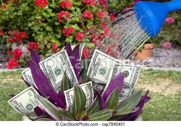 La planta de dinero está siendo regada - csp7840401