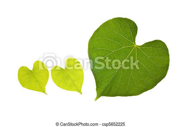 serce, śliczny, liść, kasownik modelują - csp5652225