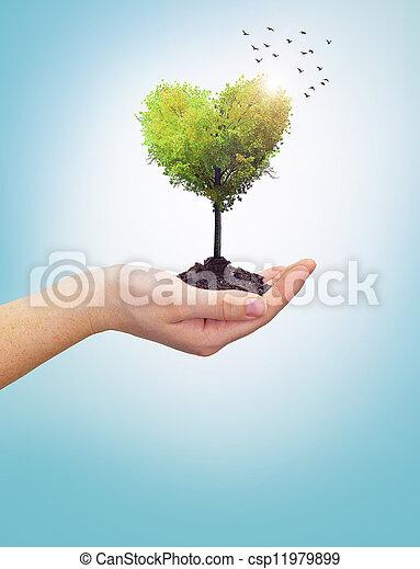 serce, babski, drzewo, dzierżawa ręka - csp11979899