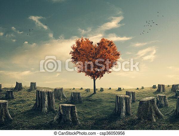 serce, klarowany, drzewo las, mający kształt - csp36050956
