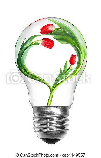 serce, naturalne światło, energia, odizolowany, formułować, tulipany, bulwa, biały, concept. - csp4149557