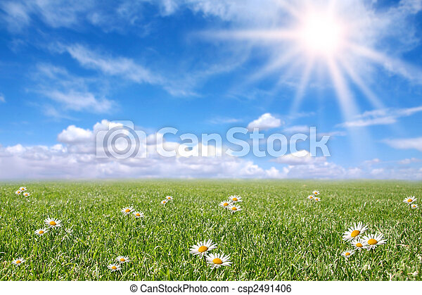 Serene Sunny Field Meadow in Spring - csp2491406