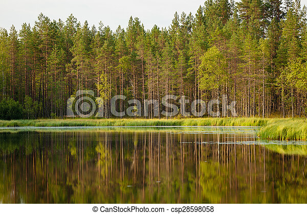 Serene sunny morning forest reflection - csp28598058