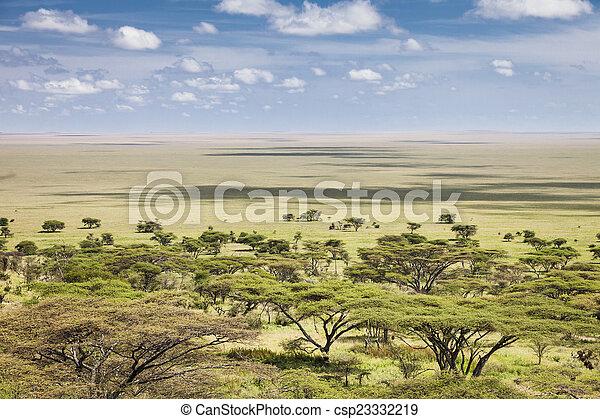 Serengeti - csp23332219