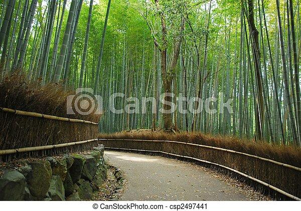 Sereno camino a lo largo de un denso bosque de bambú - csp2497441