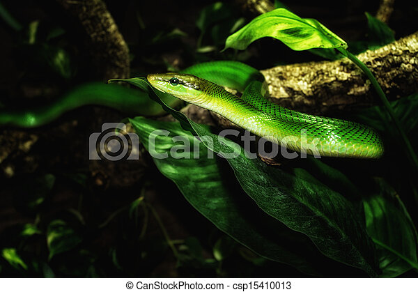 serpent vert - csp15410013