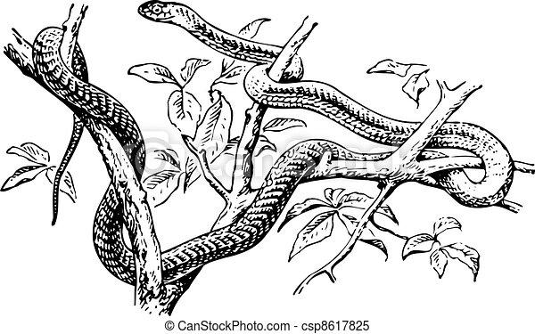 Serpiente - csp8617825