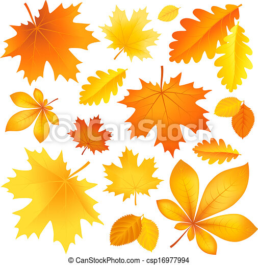 Set autumn leaves - csp16977994