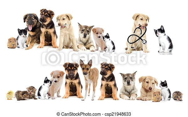 set, huisdieren - csp21948633