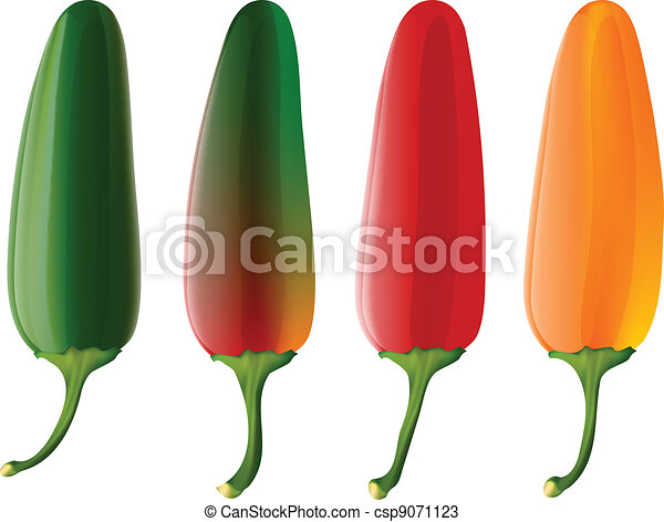 set of 4 jalapeno peppers vectors search clip art illustration rh canstockphoto com jalapeno clipart for address label clipart jalapeno pepper