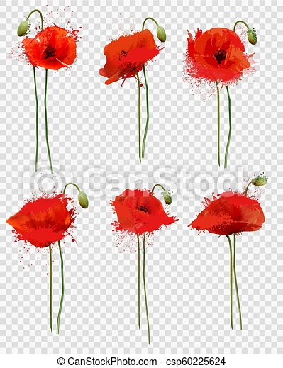 Set Of A Red Poppies Flowers On Transparent Background Vector