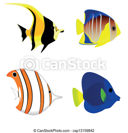 Set of a tropical fish isolated - csp13159842