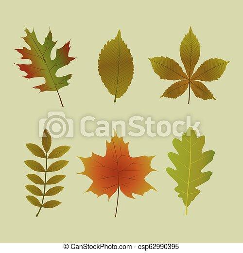 Fall Leaf Shapes