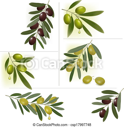 Set of backgrounds with green and black olives. Vector illustration. - csp17997748