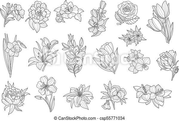 Set Of Beautiful Monochrome Flowers Lily Tulip Peony Rose