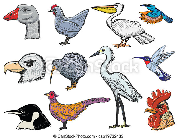 set of birds - csp19732433