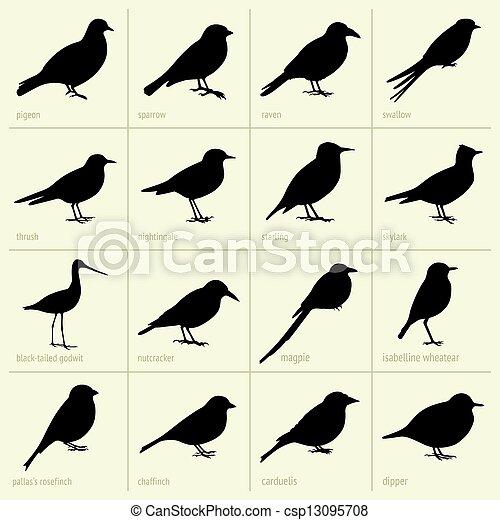 Set of birds - csp13095708